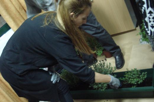 Φύτευση αρωματικών φυτών